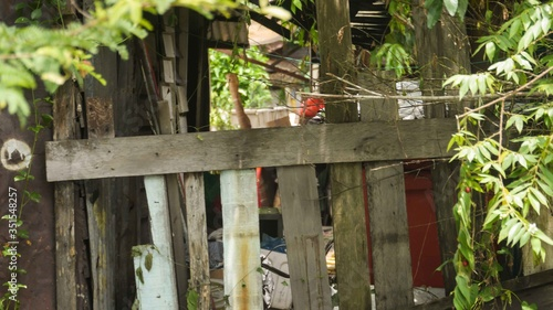 Fototapety, obrazy: Wooden railing with white and brown pillars