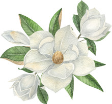 Watercolor White Magnolia Composition With White Flowers And Leaves.  Hand Drawn Watercolor Illustration