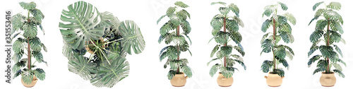 Cuadros en Lienzo Set or collection of beautiful interior plants isolated on white background