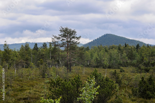 Nature view, forest, woods, moody scenery © Eliška