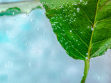 Fototapeta Łazienka - liść w wodzie