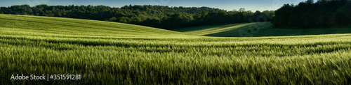 Photo Wheat Field