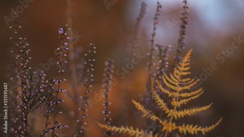 Photo Fougères et bruyères se mêlent dans un mélange de couleurs automnales harmonieus