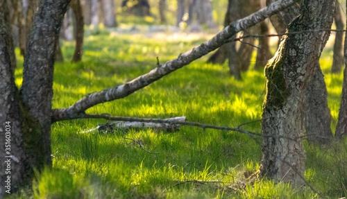 Piękny las podświetlony słońcem - 351603034