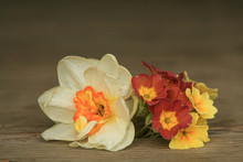 White Narcissus And Yellow And Orange Primroses Flowers On A Wooden Background.Spring Flowers.