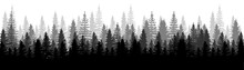 Forest Panorama View. Pines. S...
