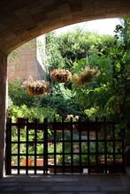 Botanical Garden On The Street...