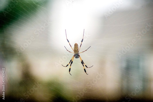 Fotografija Close-up Of Spider On Web