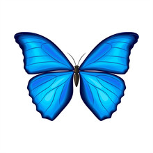 Blue Morpho Butterfly On White...