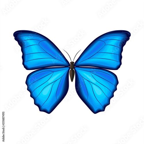 Blue morpho butterfly on white background Fototapet