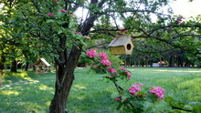Birdhouse On A Flowering Tree