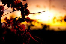 Close-up Of Silhouette Leaves Against Sky During Sunset