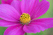 canvas print picture - Close-up Of Pink Flower Blooming At Park