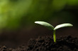 Young seedling growing in soil outdoors, closeup. Space for text