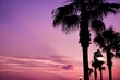 Leinwanddruck Bild - Silhouette Palm Trees And Illuminated Street Light At Dusk