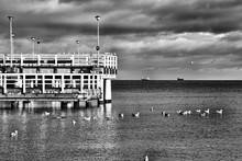 Seagulls Swimming On Sea Against Sky