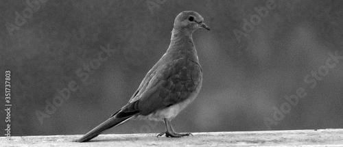 Foto Seagull Perching On Railing