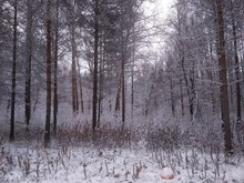 Bare Trees On Snow Covered Land