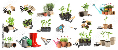Tela Set of different seedlings and gardening tools on white background