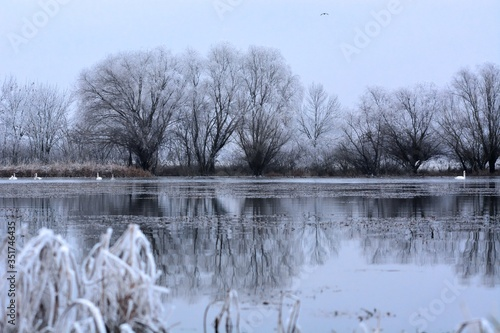 Fototapety, obrazy: Reflection Of Trees In Lake Against Sky During Winter