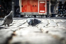 Two Pigeons On Cobblestone