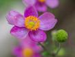 Leinwanddruck Bild - Close-up Of Water Drops On Pink Flower
