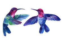 Set Of Bright Little Birds, Hummingbirds On An Isolated White Background, Watercolor Hand Drawing