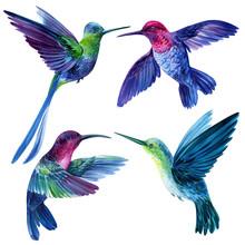 Set Of Bright Little Birds, Hu...