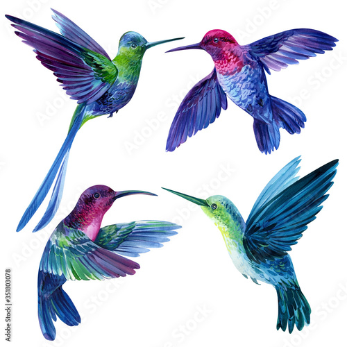 Fotografia set of bright little birds, hummingbirds on an isolated white background, waterc