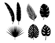 Set Vector Silhouettes Tropica...
