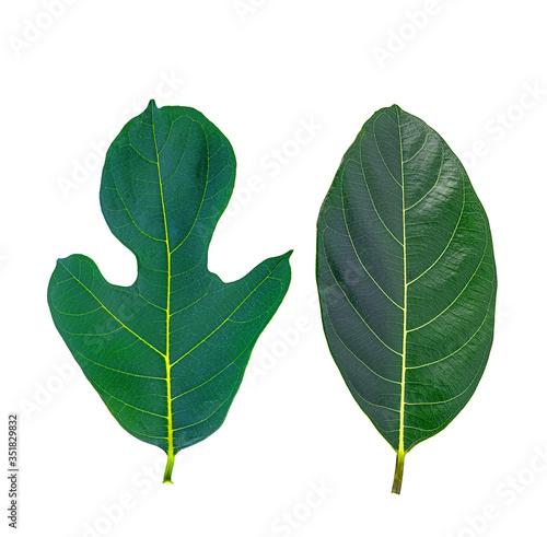 Photo fresh jackfruit leaves on a white isolated