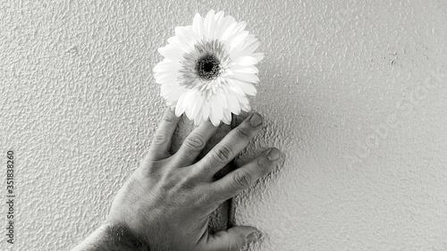 Vászonkép Close-up Of Person Hand Holding Daisy Flower