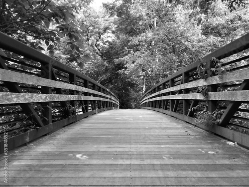 Canvas Print View Of Footbridge In Forest