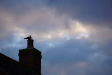 Low Angle View Of Pigeon Perching On Chimney Against Cloudy Sky