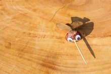 Funny Mosquito Shape Character Or Figurine Made With Chestnuts On A Wooden Background In A Sunny Day