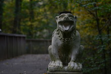 Statue Of Dog In Forest
