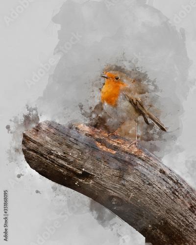 Fototapeta Digitally generated watercolor painting of Stunning image of Robin Red Breast bi