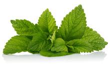 Fresh Leaf Mint Green Herbs In...