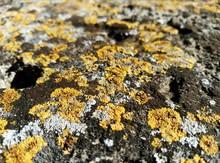 Full Frame Shot Of Yellow Moss On Rock