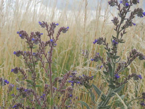 Fototapety, obrazy: Close-up Of Wildflowers Growing In Field