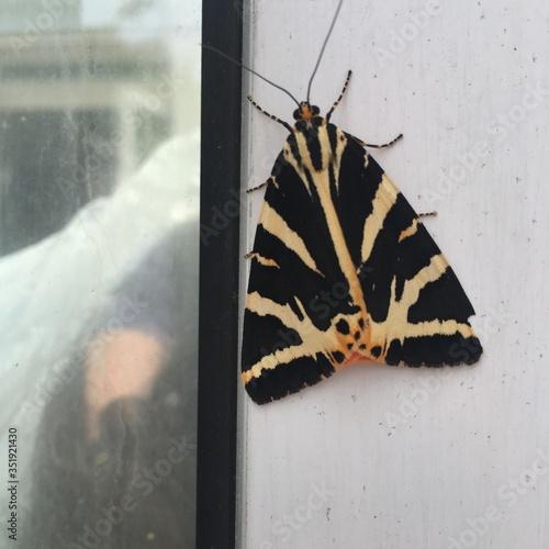 Fototapeta Close-up Of Butterfly On Window