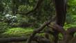 Park Zdrojowy w Szczawnie Zdroju, stare jałowce chińskie
