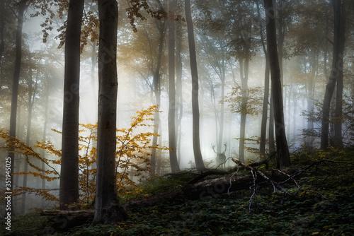 Obraz Deers in the forest - fototapety do salonu