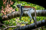 tropical monkey resting on a branch