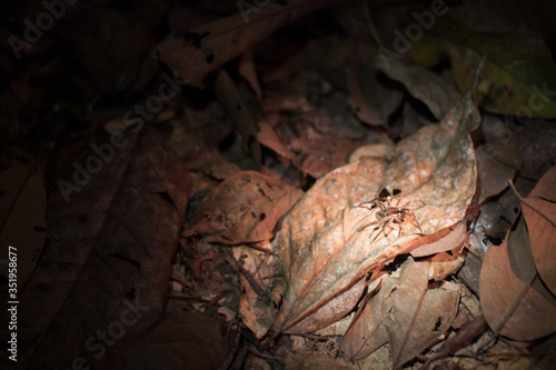 Slika na platnu Spider On Leaf