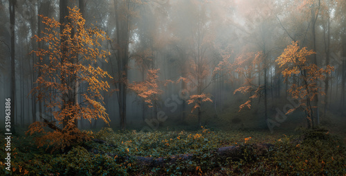 Autumn foggy forest Canvas Print