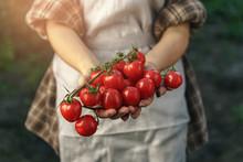 Farmers Holding Fresh Tomatoes...