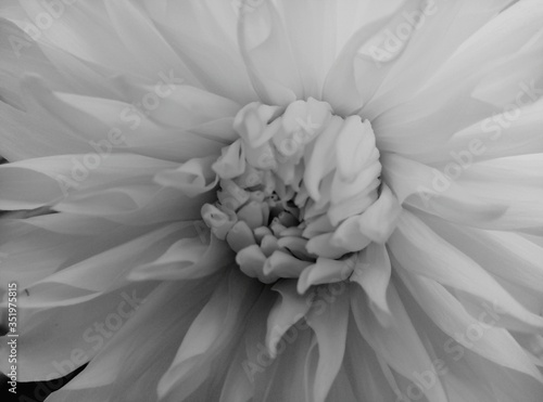 Fototapety, obrazy: Full Frame Shot Of Flower