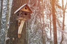 Fancy Bird House In Forest