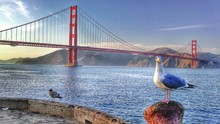 Seagull In Front Of Golden Gate Bridge Over River Against Sky